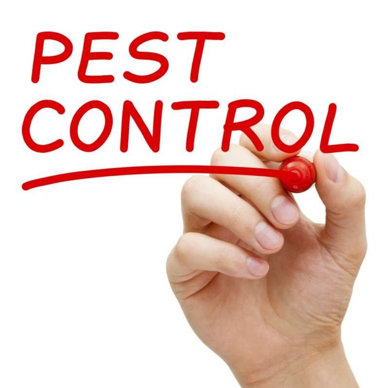 24 hr Pest Control in Amherst, MA 01002