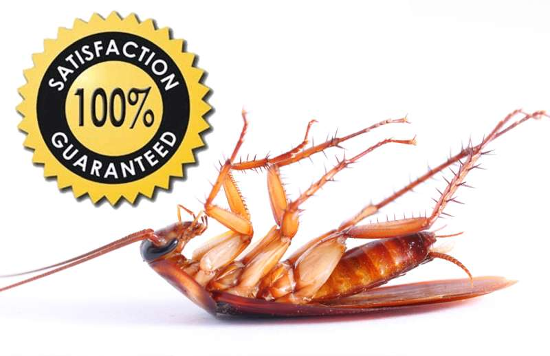24hour Pest Control in Adjuntas, PR 00601