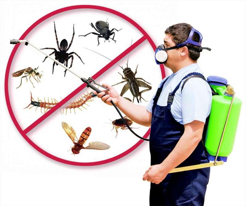 Lawn Pest Control in Springfield, MA 01102