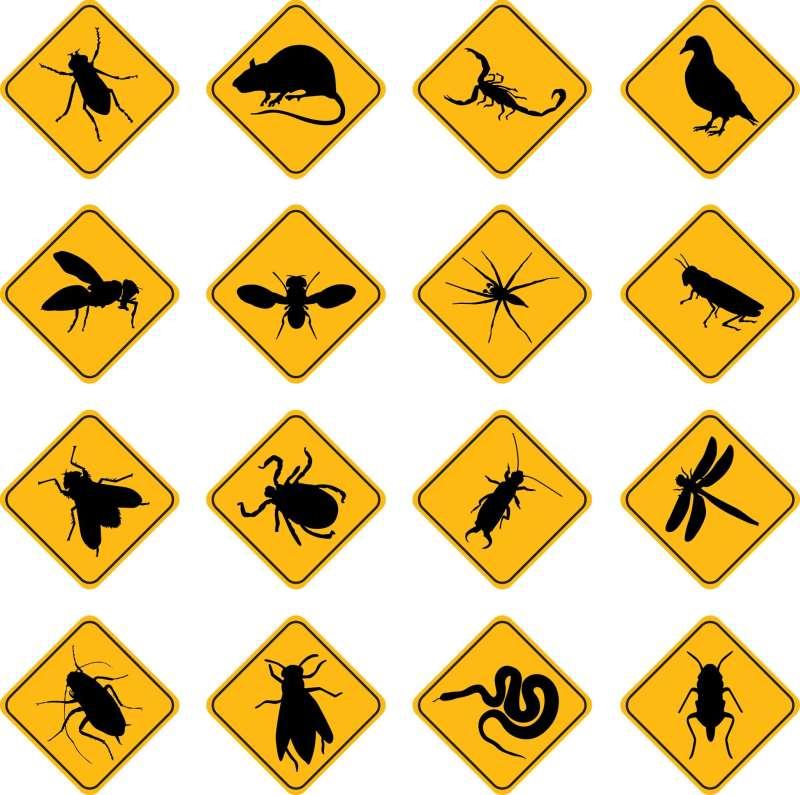24 hr Pest Control in Aguada, PR 00602