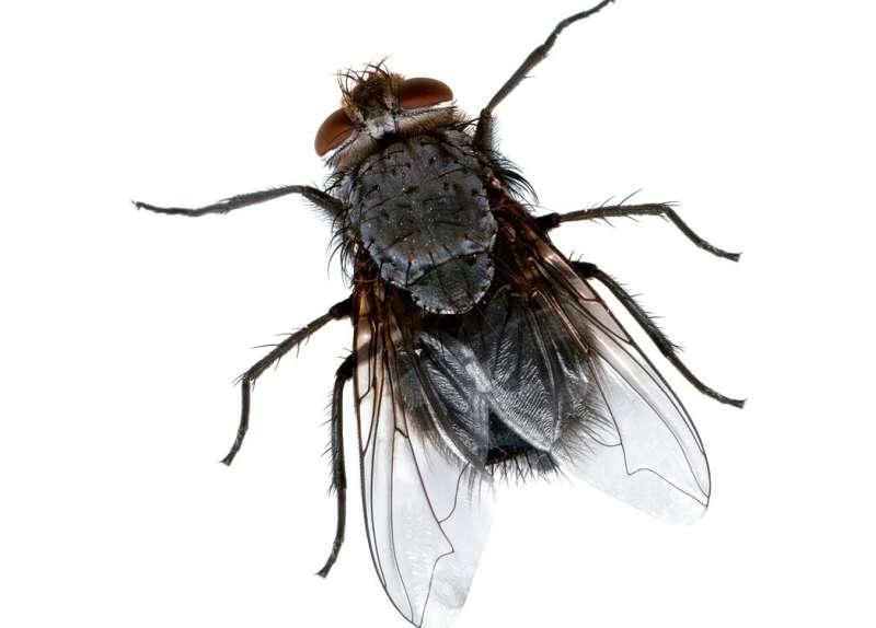Lawn Pest Control in Jayuya, PR 00664