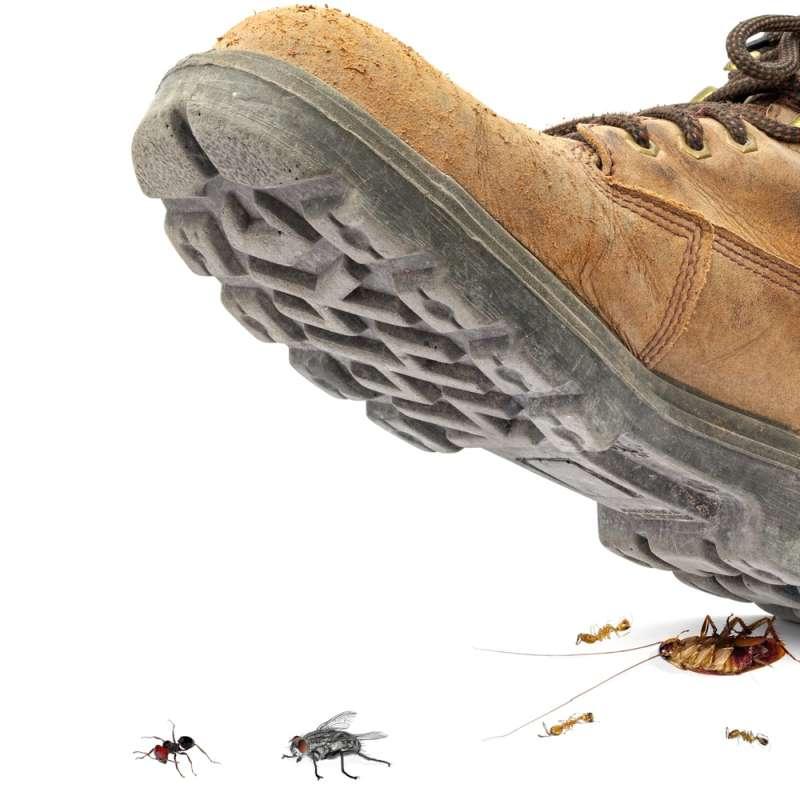 24 hr Pest Control in Lanesboro, MA 01237