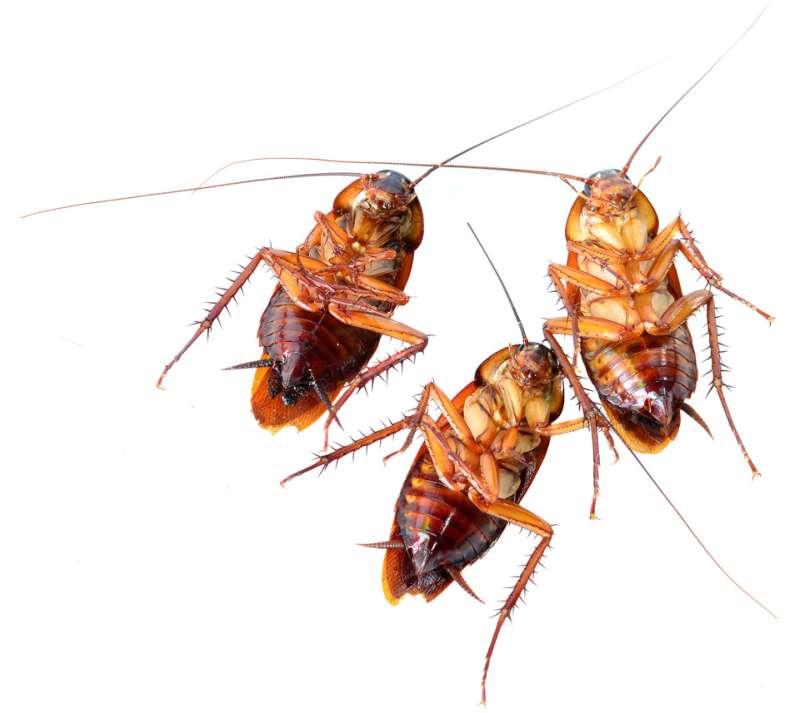 24hr Pest Control in Heath, MA 01346