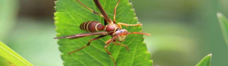 24hour Pest Control in Bayamon, PR 00960