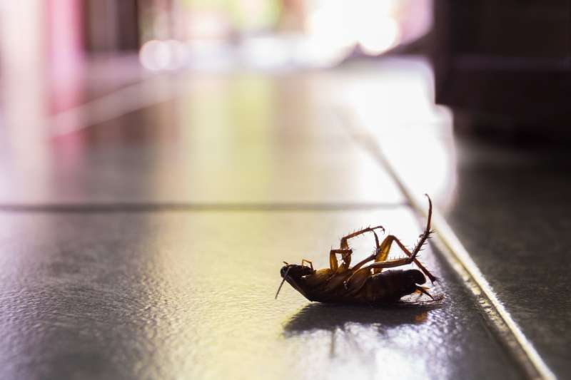 24 hour Pest Control in Wales, MA 01081