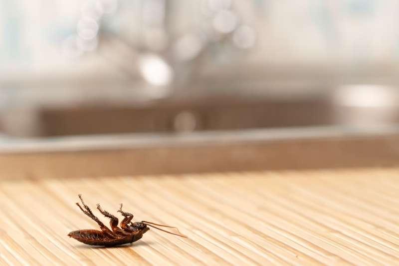 24 hr Pest Control in Otis, MA 01253