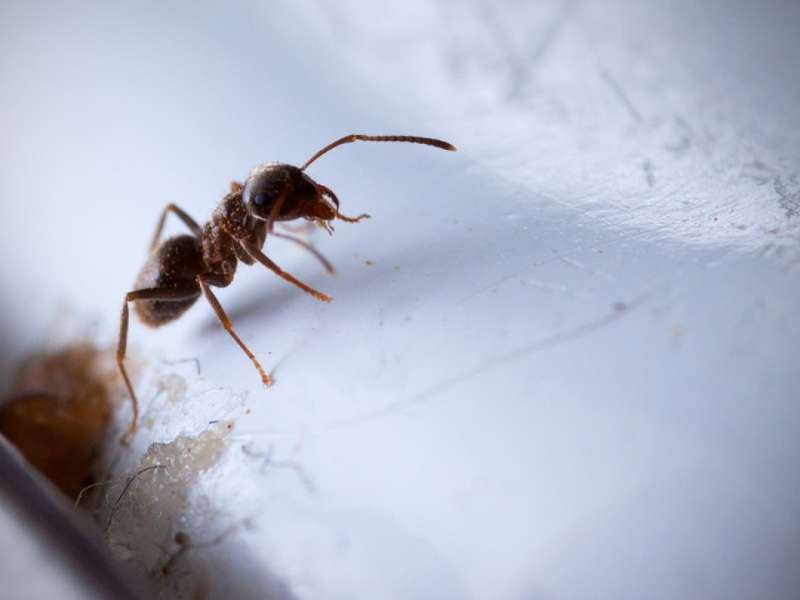 24 hour Pest Control in Groton, MA 01471