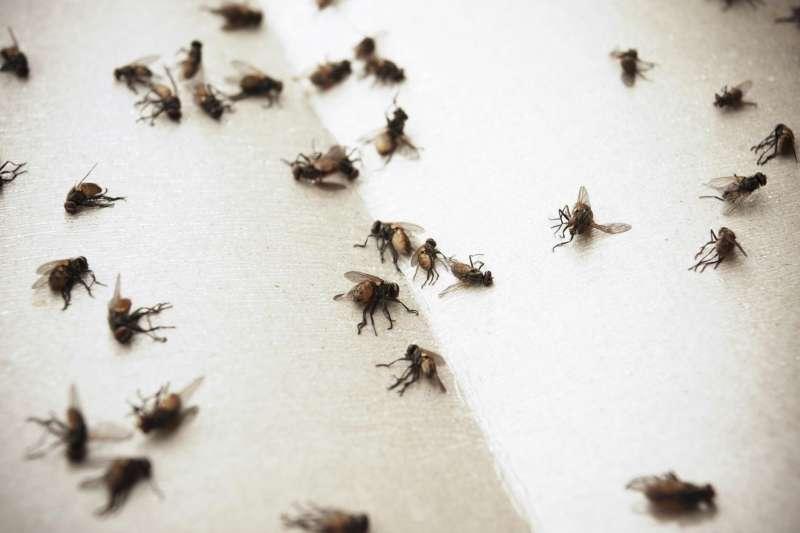 24 hr Pest Control in Carolina, PR 00983