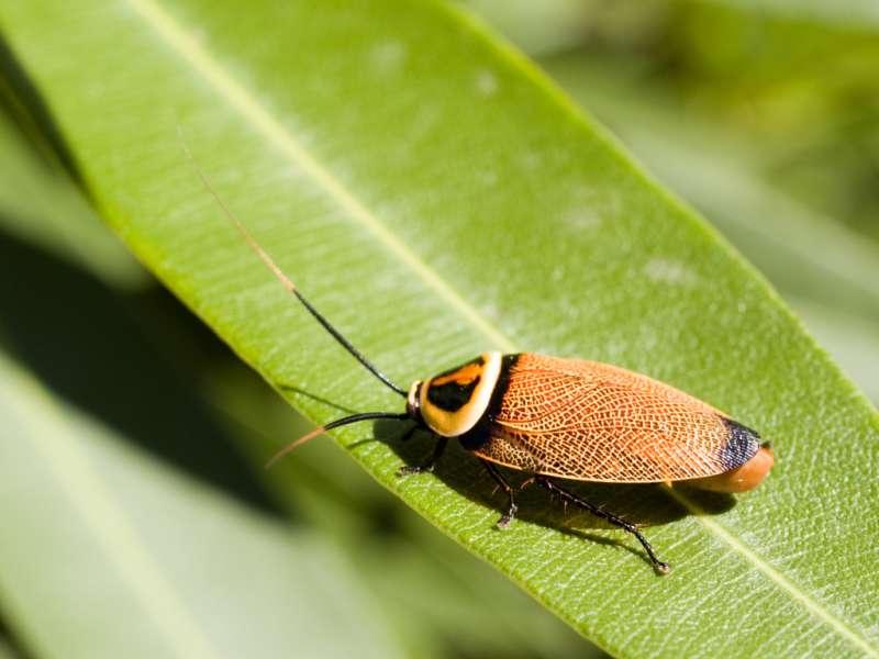 24hr Pest Control in Chicopee, MA 01013
