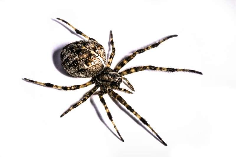 24 hr Pest Control in San Juan, PR 00927