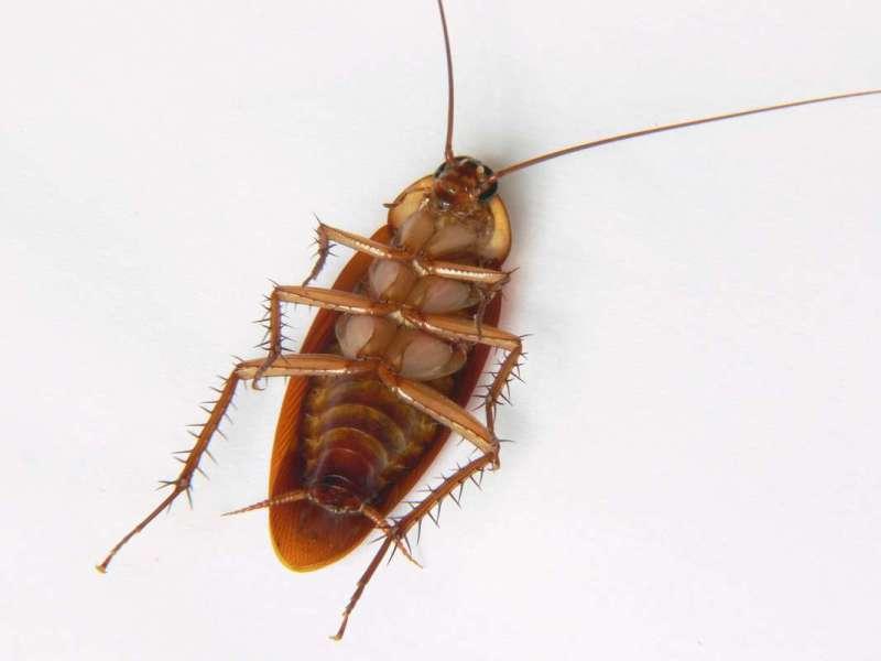 24hr. Pest Control in Bondsville, MA 01009