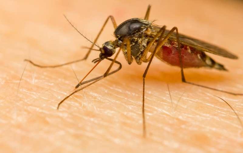 24hr Pest Control in Adams, MA 01220